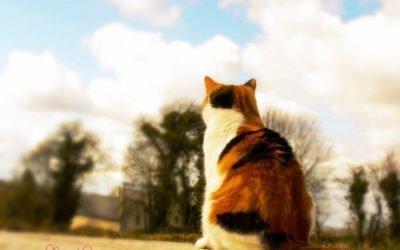 Splodge Cat