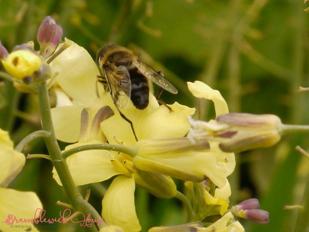 A Beekeeper pt 2