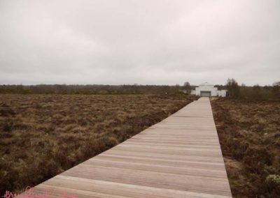 Bramblewick House Corlea Trackway